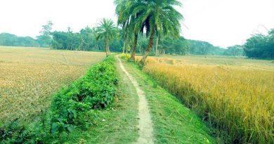 spring in bd
