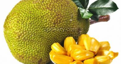 healthy jackfruit