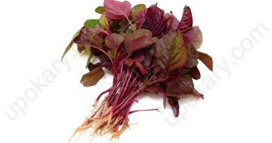 lal shak or red spinach