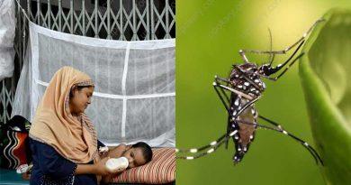 dengue fever baby