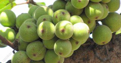 figs-2