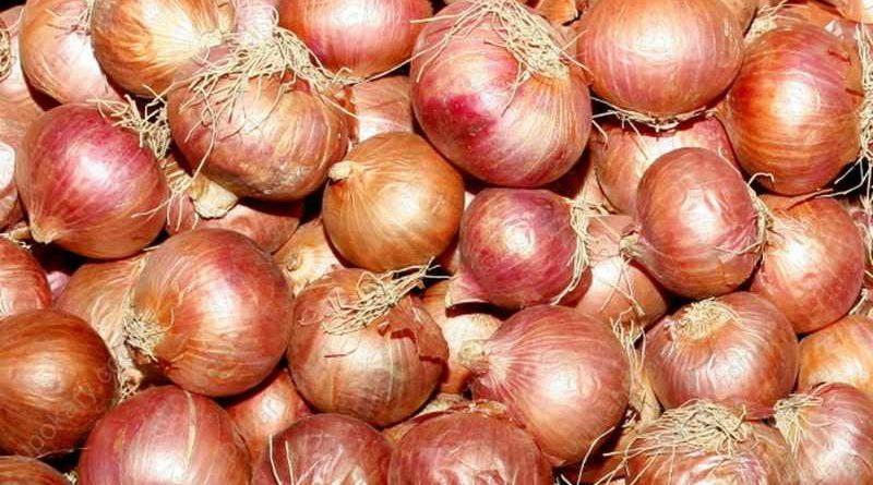 onion-3