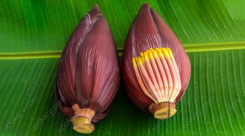 banana-flower