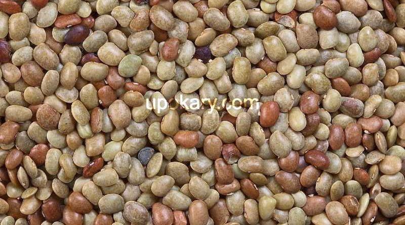 bean seeds