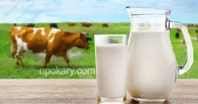 healthy cow milk