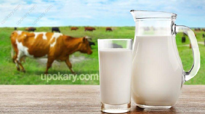 healthy cow milk