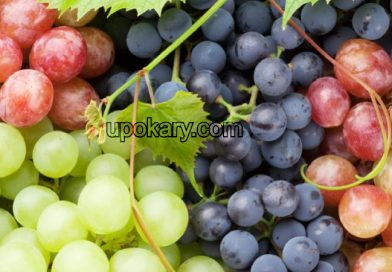 healthy grape