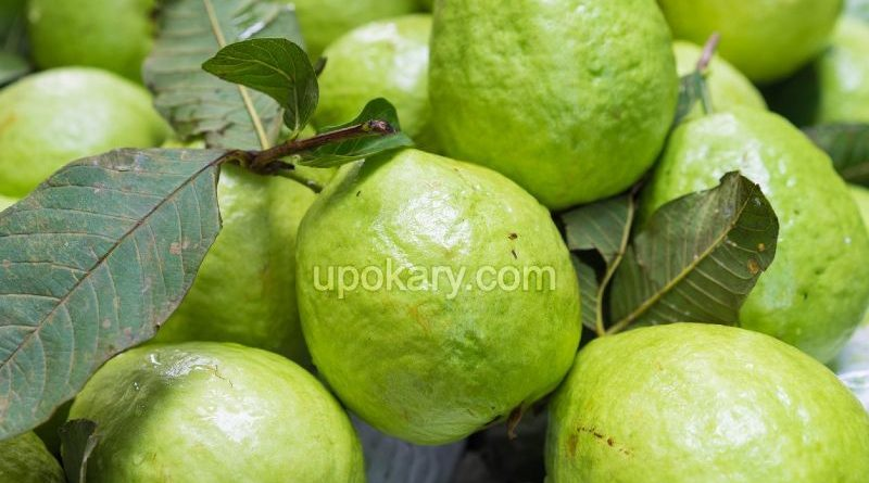 healthy guava fruit