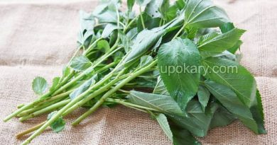 jute leaves vegetables