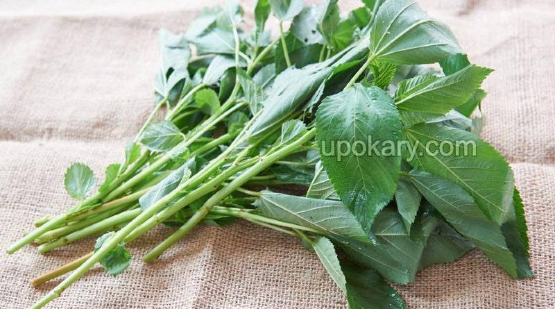jute leaves vegetables