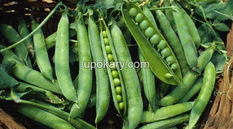 Beans5