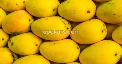 ripe-mango