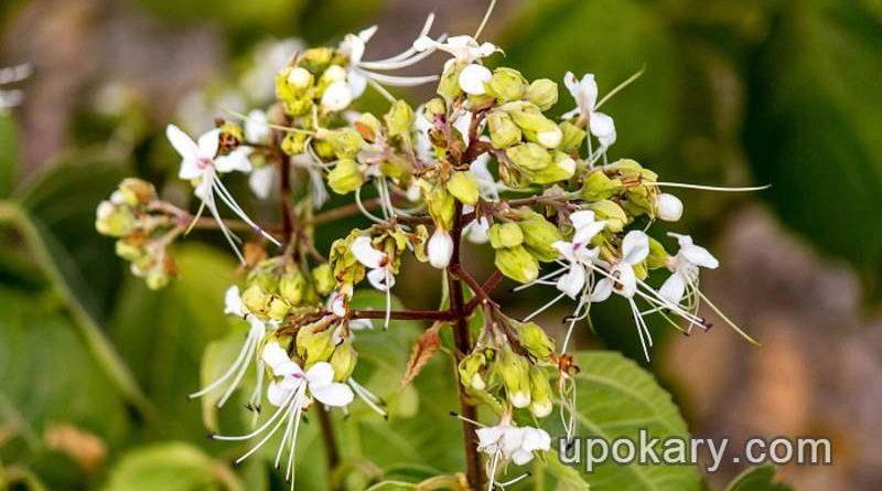 Bhat-flowers