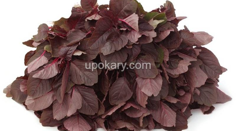 Red-spinach