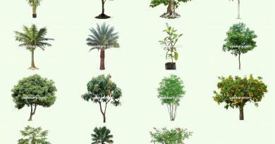 Tree names