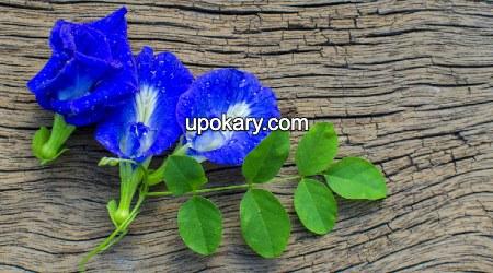 blue flower tea