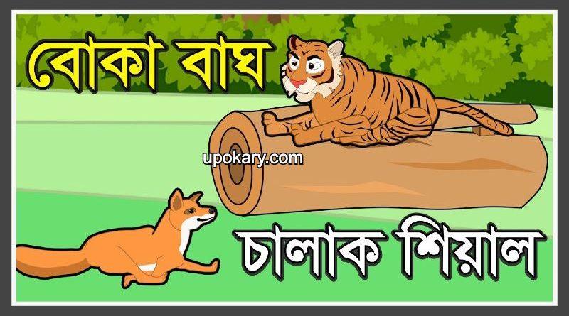 tiger story