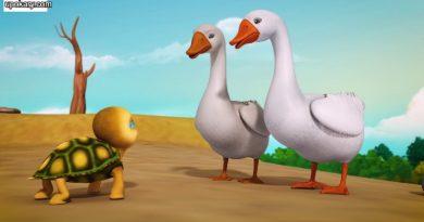 tortoies duck story