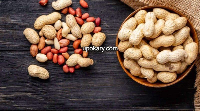 pregnant peanuts