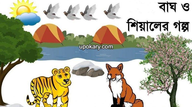 tiger fox story