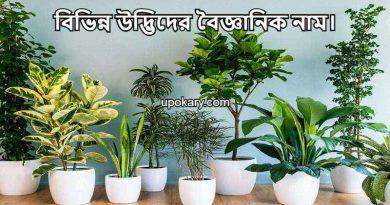udbidh name