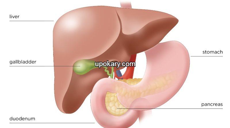 Pancreas Nearby Organs