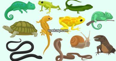 Reptile cartoon