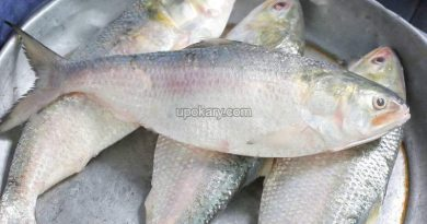 Hilsa-fish-eggs